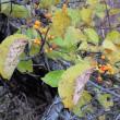 10月18日(水) はじめての自然散歩~定山渓遊歩道~の様子