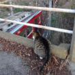 猫ののんちゃんと電車 電車を見つめるのんちゃん
