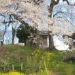 福島県郡山市、高柴デコ屋敷の天神夫婦桜です!!