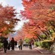☆京都旅行:清水寺の紅葉...♪