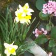 春のショット📷
