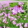 花彩々   れんげ畑