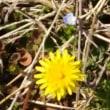 春の雑草の中でも可憐な花について