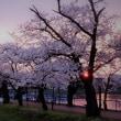 瓢湖 2017春の写真集 3