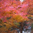 宍粟市の紅葉(帯からバックオーダー)