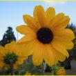 9月21日・今日の花
