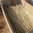 サツマ床作り