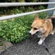 お散歩のち目薬