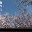 俳句写真1614 梅の花