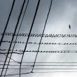 電線の鳥・・・・!