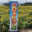 ひまわり畑 (大垣市平町)