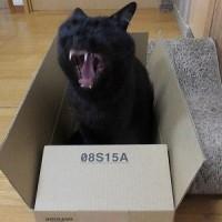 箱入りクロ猫