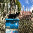 ピピ島の猫たち