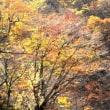 デジブック 『錦秋の雨』