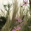 コラボした秋の花