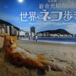 「岩合光昭の世界ネコ歩き2」