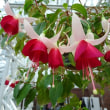 「温室の花たち」/神代植物公園(2017秋)