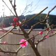 2月の開花時期に向けて力を貯めています