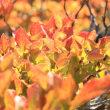 好古園の紅葉はボチボチです