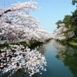 白銀町市役所通堀桜満開(弘前さくらまつり30)