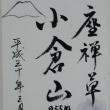 座禅草in小倉山