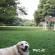 きなちゃんの夏休み( ? )