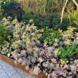Flower Garden in 横浜赤レンガ倉庫♫( ͡° ͜ʖ ͡°)