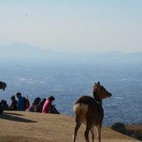 春日山遊歩道から若草山山頂へ