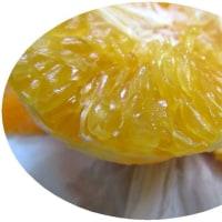 美味しい柑橘å…\荷しました