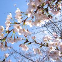 春ですョ~♪