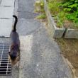 猫散歩・エビリーに買い物