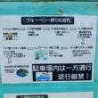 神戸ブルーベリーガーデンcafe @西区押部谷町細田1307