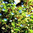 小さな花の集い、小花を数多くで雰囲気を出してみたかった?