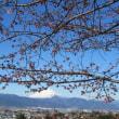 桜に梅 花開き
