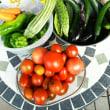 完熟トマト、ズッキーニ、ピーマンなど収穫ラッシュ