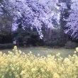桜が咲きました【1】