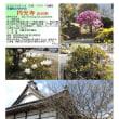 花巡り ツツジ-その193 円光寺 古河市