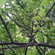 【自然】【草木】【草花】【美しさ】