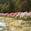 信州阿智村の花桃祭りに来ています☀