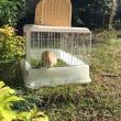 コナモの庭デビュー 庭の仲間はアヒルと犬