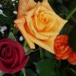 今年も姪より母の日のバラの花、届きました。