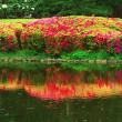 神代植物公園はツツジが綺麗です。