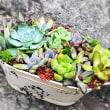 自分の寄せ植えを作りと葉挿し