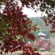 京の紅葉2017 旧嵯峨御所 大覚寺門跡 大沢池