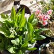 ガーデンの花たち。