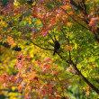 紅葉の木に来る野鳥