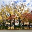 京都の紅(黄)葉の現在(いま)、、、、、