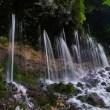乗鞍高原 大野川の湧水の滝 「タロ下湧水」