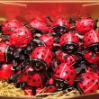 今年も、オーガニック 「てんとう虫チョコレート」入荷しました!
