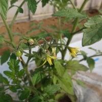 春の野菜づくり特別半日講座 開催いたしました!5月3日参加者募集中。